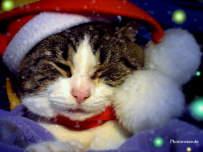 Katzenfotos tiger auf 4 pfoten in aller welt bilder katzen fotos